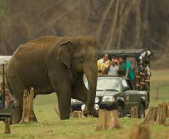 Kabini Tour Package