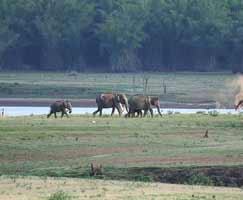 Kabini Travel Package