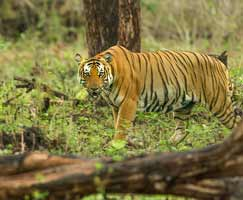 Honeymoon Tour To Kabini