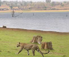 Kabini Tourism Honeymoon